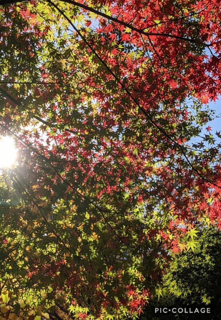 関内駅付近の紅葉。